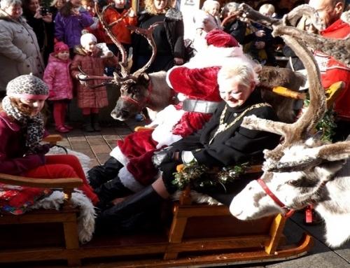 Wynajem reniferów na eventy świąteczne