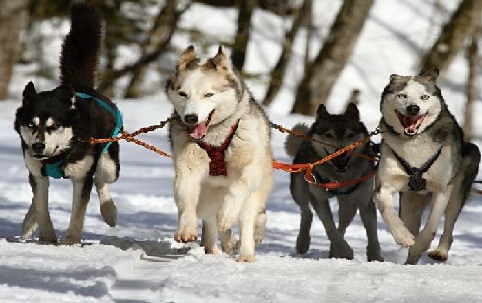 Zima w górach – pomysł na firmowy event