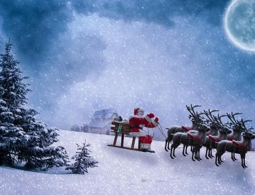 Dlaczego warto wynająć renifery na imprezę świąteczną?
