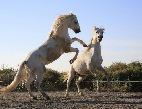 Nauka jazdy konnej pomysłem na udaną imprezę integracyjną