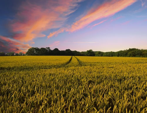 Wyjazd integracyjny w wiejskim klimacie