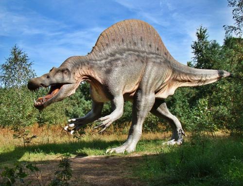 Gdzie i jak zorganizować imprezę w parku dinozaurów?