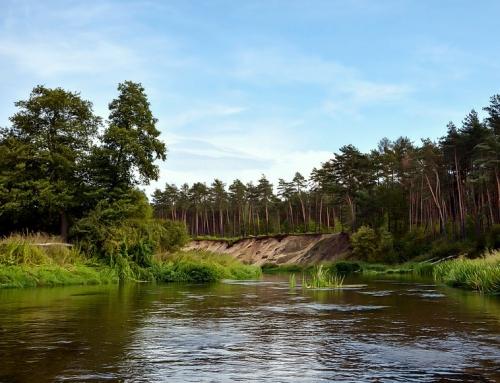 Spływy kajakowe rzeką Pilicą – plenerowy event firmowy