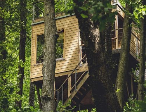 Wyjazd firmowy w zgodzie z naturą (hotel w drzewach)