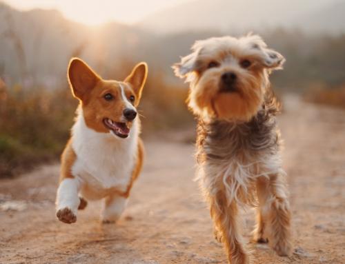 Impreza integracyjna z psimi przyjaciółmi – gdzie warto pojechać?
