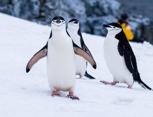 Impreza tematyczna z pingwinem