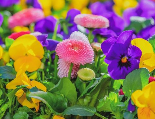 Impreza dla miłośników kwiatów, czyli flower-power w innym wydaniu