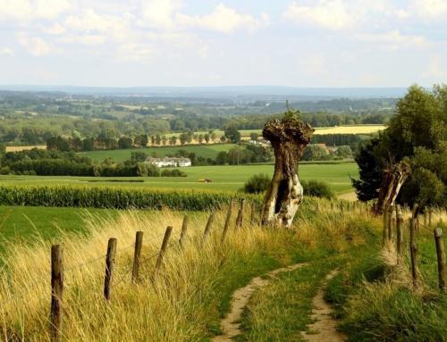 Wyjazd na wieś, czyli krowy, konie i inne pola uprawne