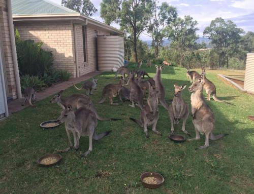 Zabawa w stylu australijskim, czyli kangury i didgeridoo
