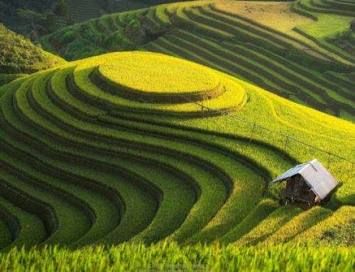 Dekoracje w stylu wietnamskich pól ryżowych