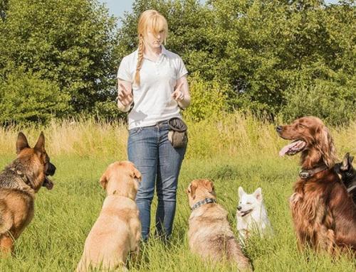 Szkolenie dla psów i ich właścicieli – jak nauczyć psa porządku?